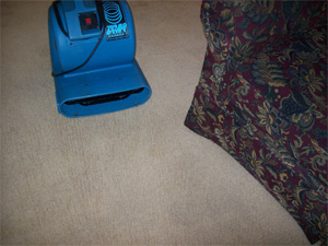 Turbo dry your carpet